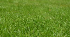 kvalitní trávník