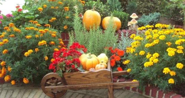 podzimni_hnojeni_zahrady